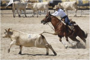 Team Penning: Apartação esportiva e um encontro familiar