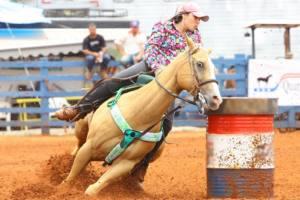 Compra um cavalo de Tambor?